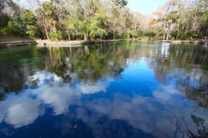 Florida Springs Clean Water