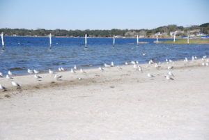 Photos of Waterfront Park Beach in Clermont, FL.