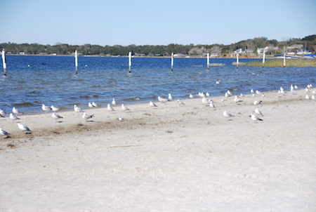 12 Fun Things To Do In Clermont Fl Waterfront Park Beach