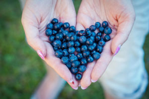 picking blueberries clermont fl