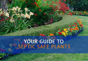 colorful septic safe plants