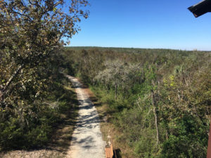 Greenway Trail Near Clermont, FL