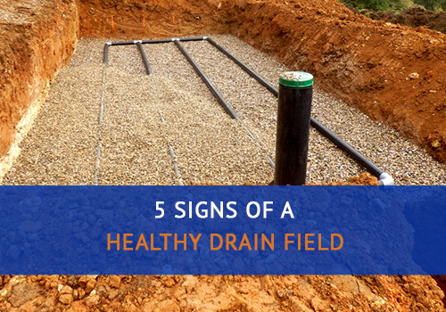 5 Signs of a Healthy Drain Field